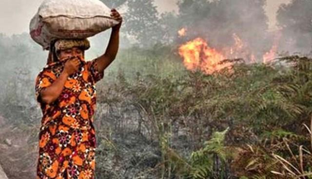 Peringatan BMKG Musim Kemarau Makin Meluas : Waspada Potensi Kebakaran Hutan dan Lahan