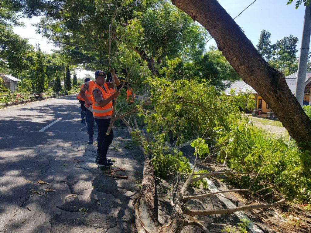 Respon Cepat Tim SAR Brimob Gorontalo Untuk Melakukan Evakuasi Pohon Tumbang di Jalan Trans Sulawesi