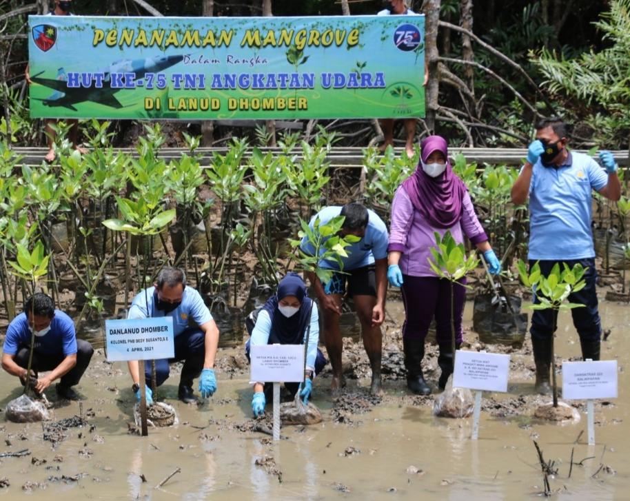Peringati HUT Ke – 75 TNI AU Warga Lanud DhomberTanam Pohon Mangrove